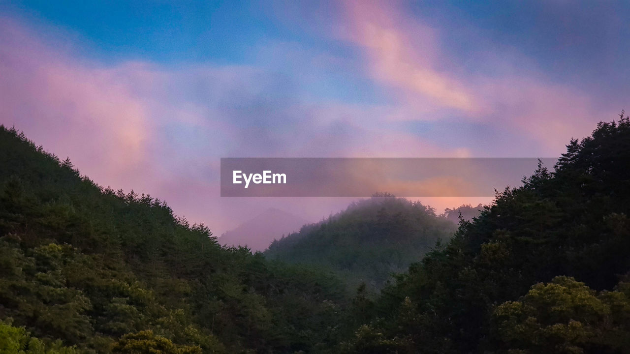 tree, sky, beauty in nature, tranquility, scenics - nature, tranquil scene, plant, sunset, cloud - sky, no people, nature, non-urban scene, environment, growth, forest, idyllic, landscape, outdoors, orange color