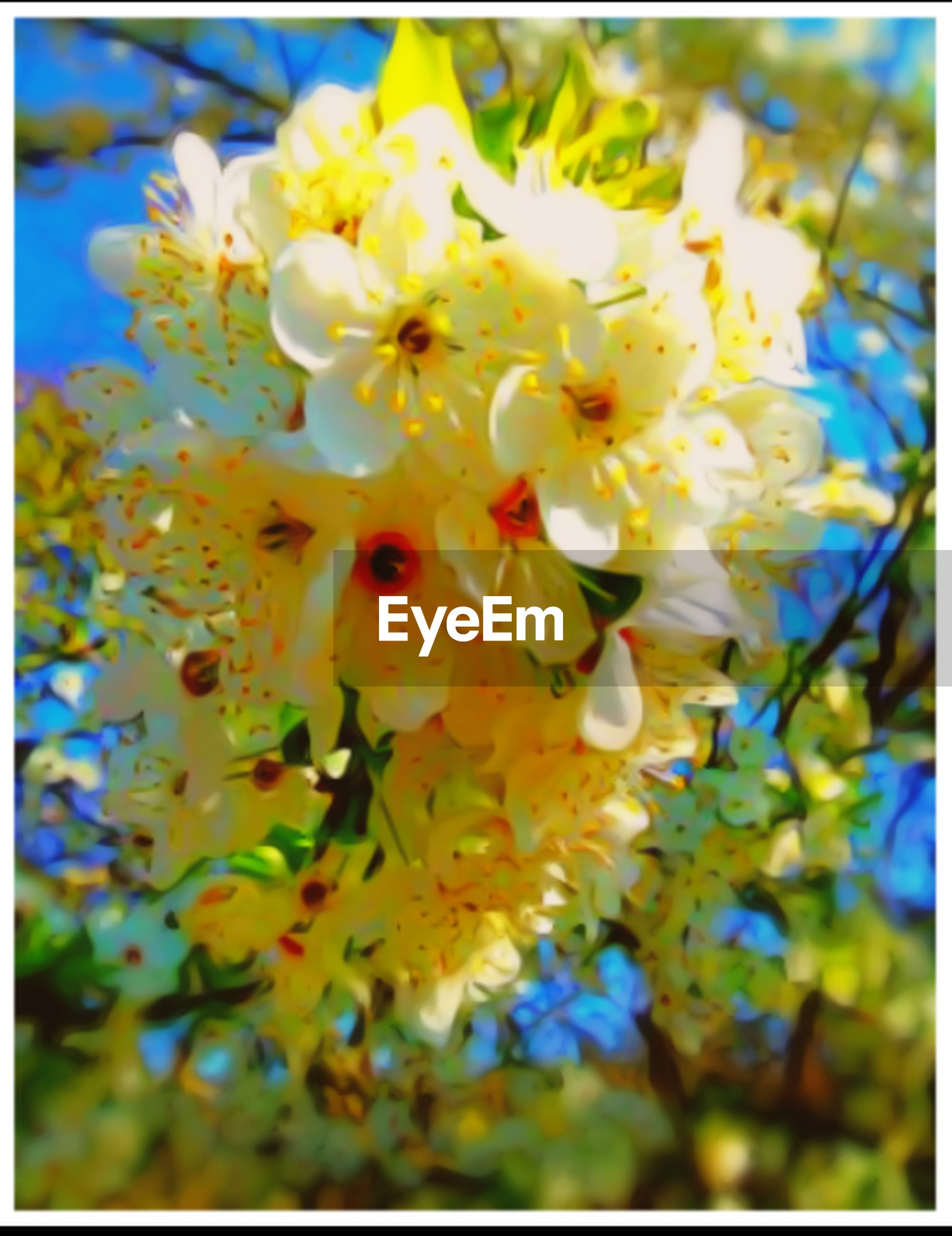 flower, plant, flowering plant, vulnerability, fragility, transfer print, freshness, auto post production filter, beauty in nature, growth, close-up, yellow, petal, flower head, inflorescence, nature, no people, outdoors, pollen, day, springtime, spring