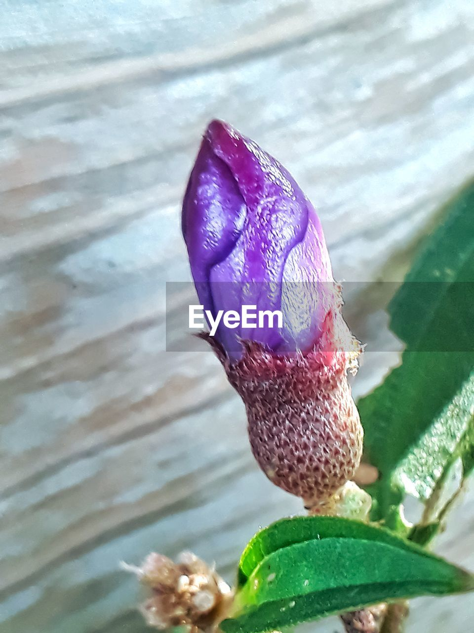 close-up, freshness, plant, vulnerability, fragility, beauty in nature, leaf, growth, nature, plant part, flowering plant, flower, petal, pink color, day, inflorescence, flower head, no people, water, purple, outdoors, pollen
