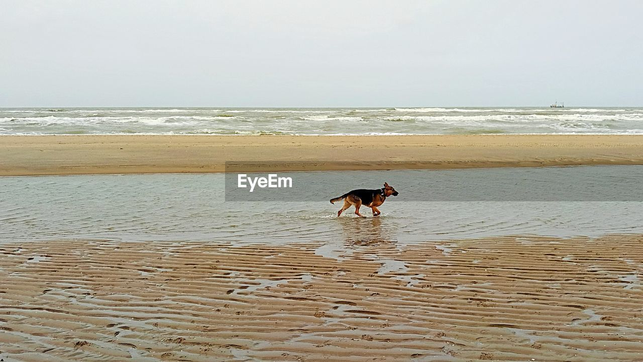 dog, sea, pets, beach, domestic animals, one animal, animal themes, water, nature, mammal, horizon over water, sand, outdoors, wave, beauty in nature, sky, scenics, day, no people