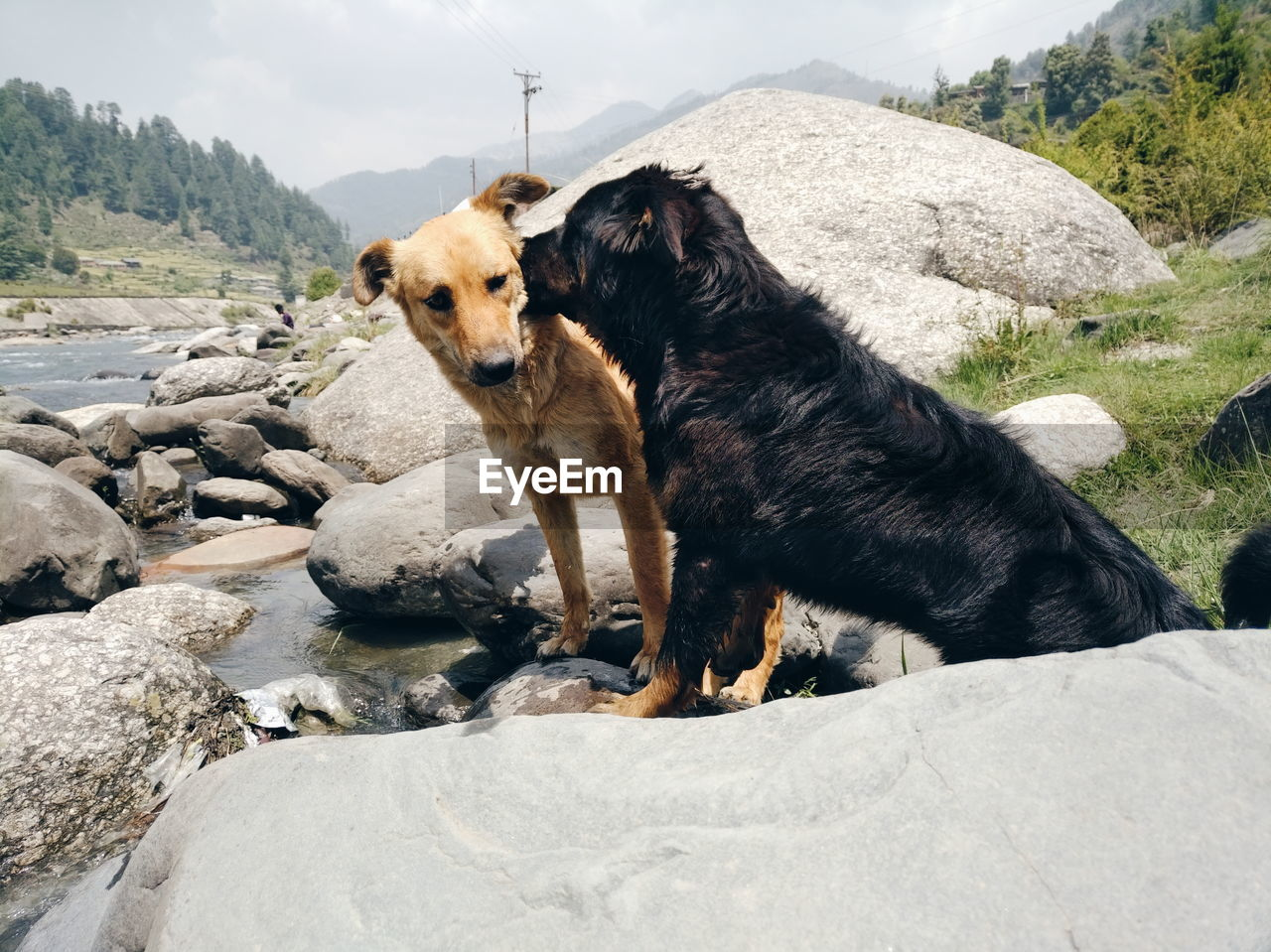 pets, one animal, domestic, animal, animal themes, domestic animals, canine, dog, mammal, solid, rock, vertebrate, rock - object, nature, day, mountain, no people, outdoors, looking, standing