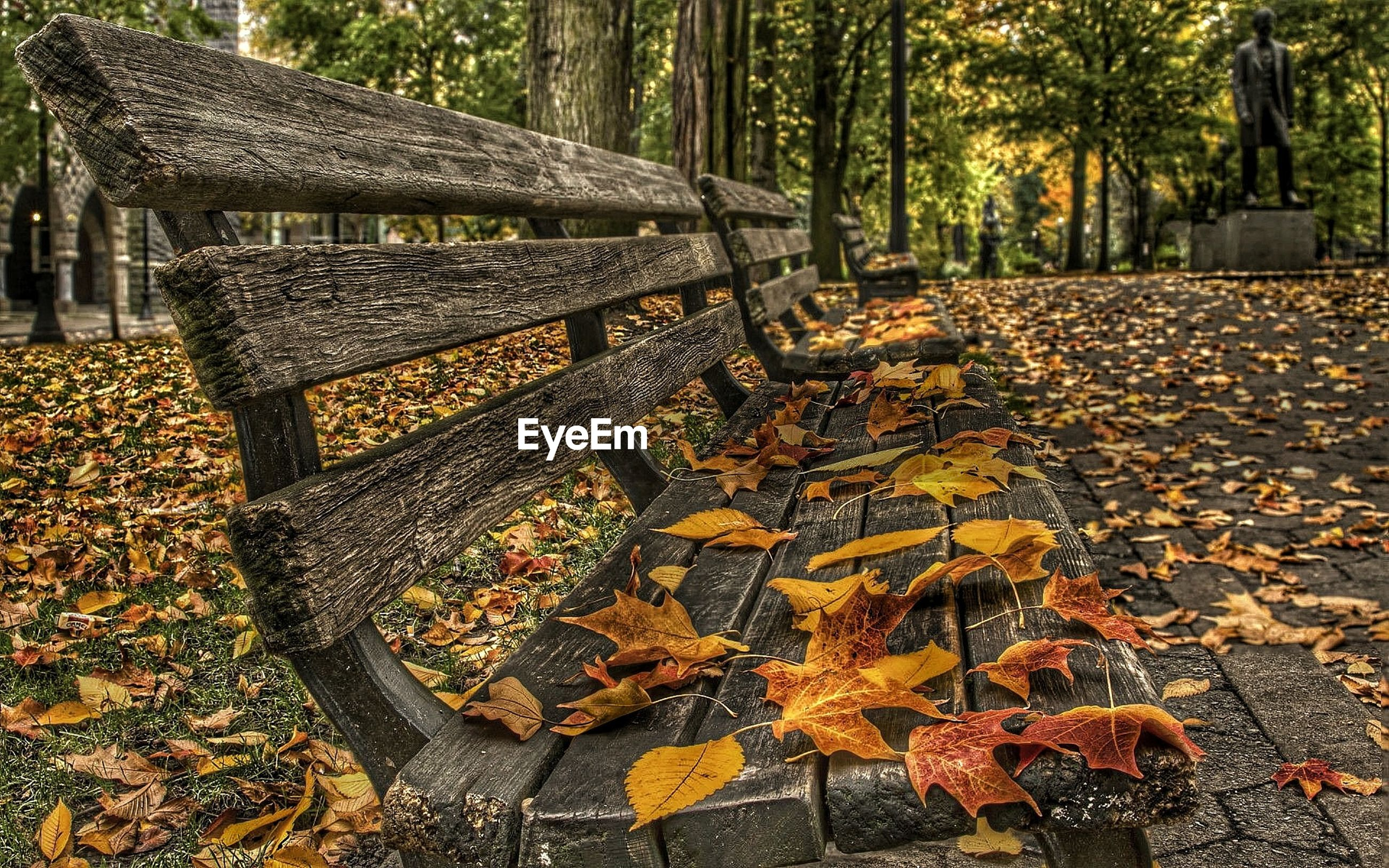 autumn, change, leaf, tree, season, dry, fallen, built structure, leaves, nature, day, falling, park - man made space, building exterior, outdoors, architecture, growth, fall, yellow, no people