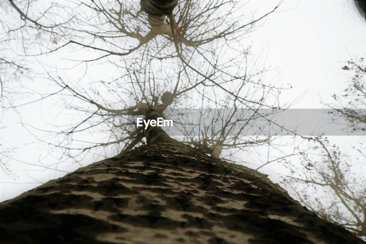 low angle view, tree, branch, outdoors, bare tree, day, sky, nature, no people, beauty in nature, animal themes