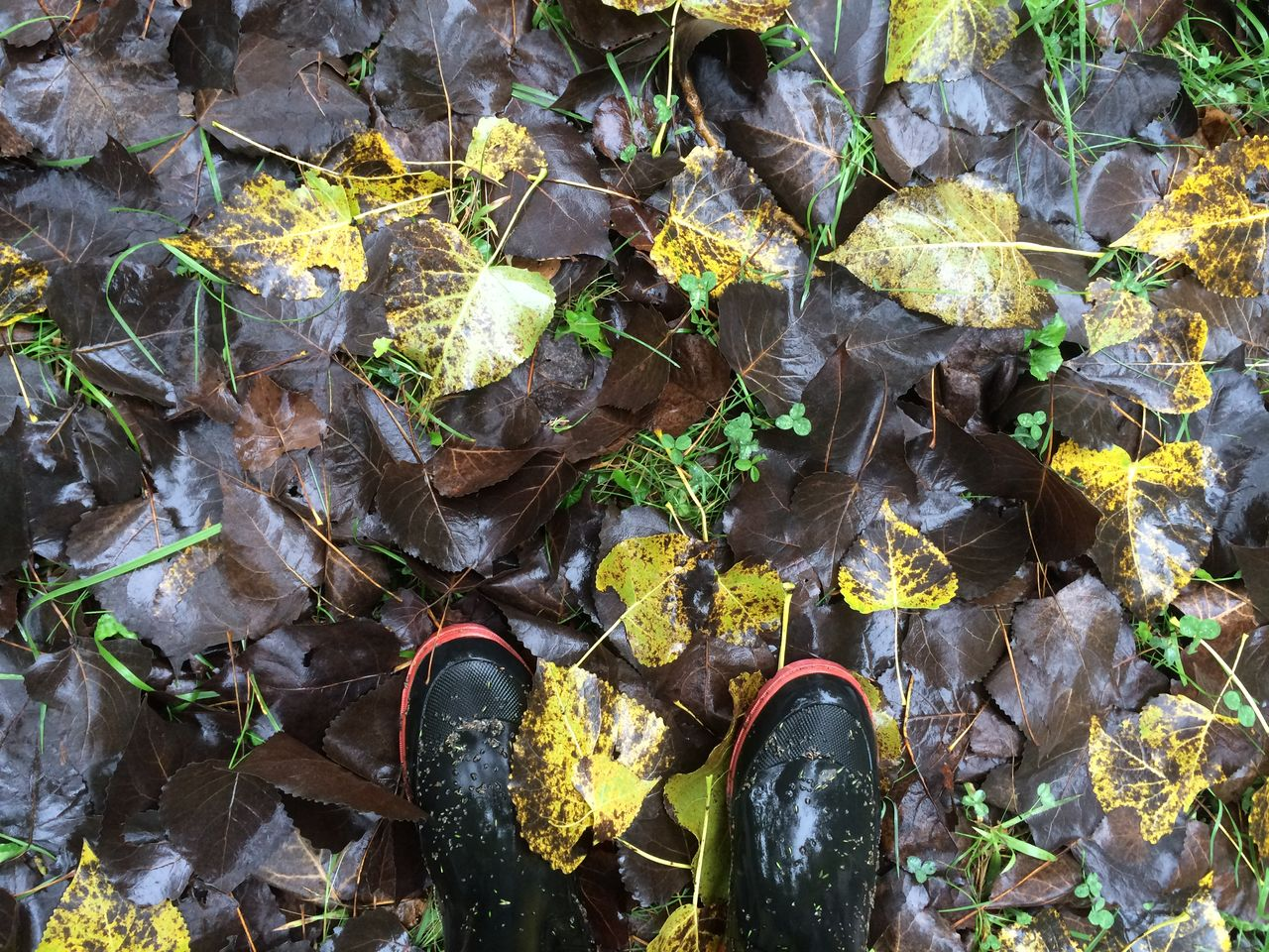 Low section of man standing on wet leaves