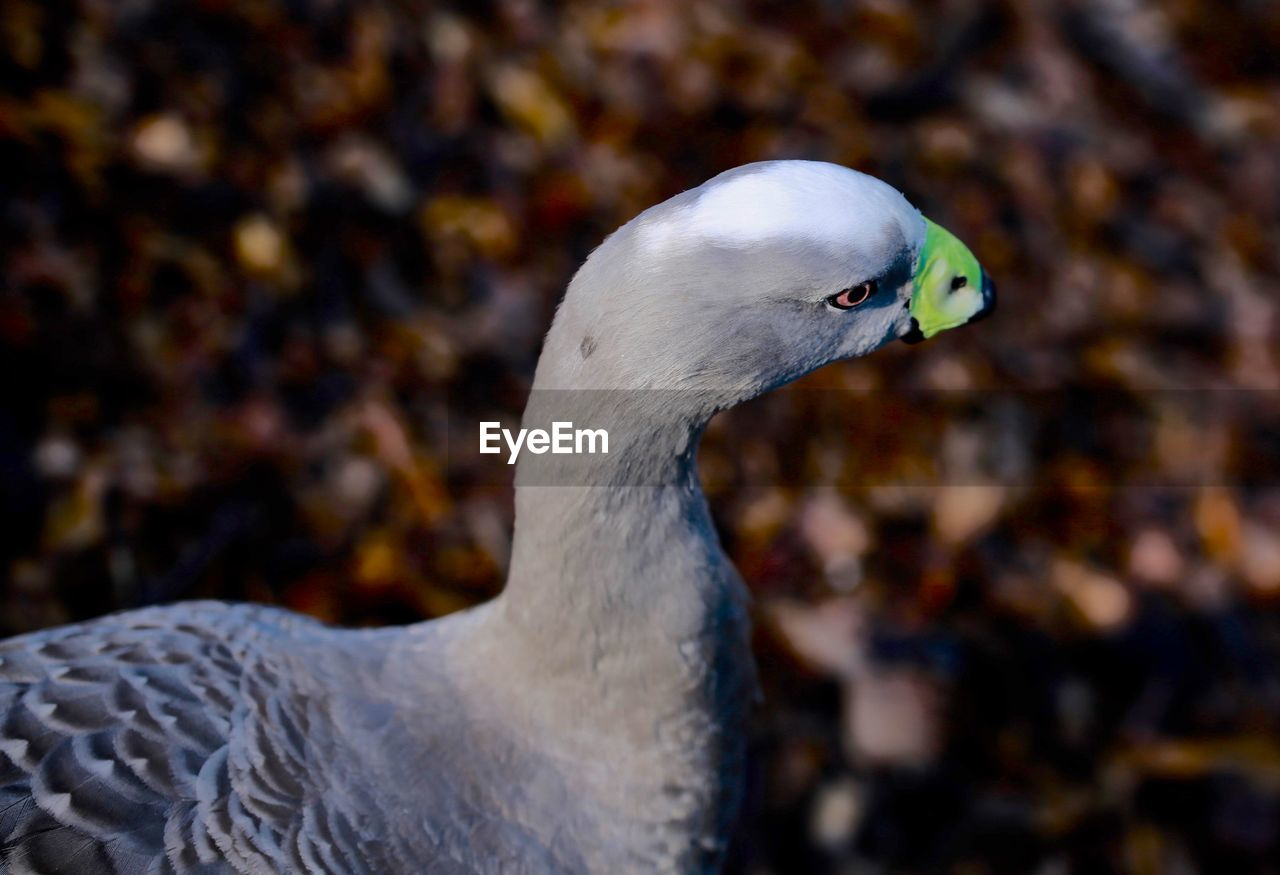 bird, animal themes, animal, vertebrate, animals in the wild, one animal, animal wildlife, focus on foreground, close-up, day, beak, no people, nature, animal body part, outdoors, white color, looking away, side view, animal head, looking, animal eye, animal neck