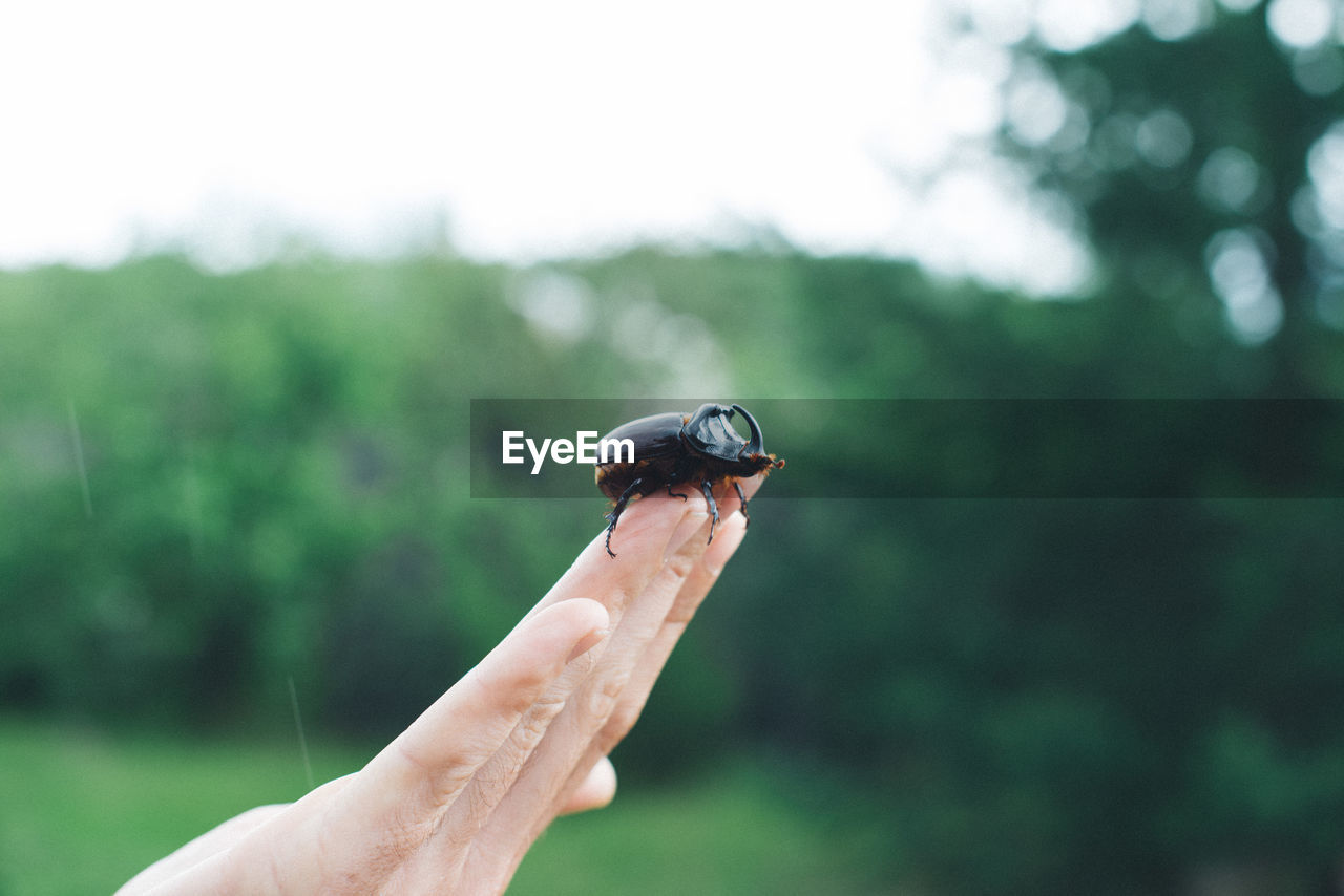 human hand, real people, one person, holding, human body part, focus on foreground, outdoors, day, one animal, nature, lifestyles, leisure activity, men, beauty in nature, close-up, tree, sky, mammal, people