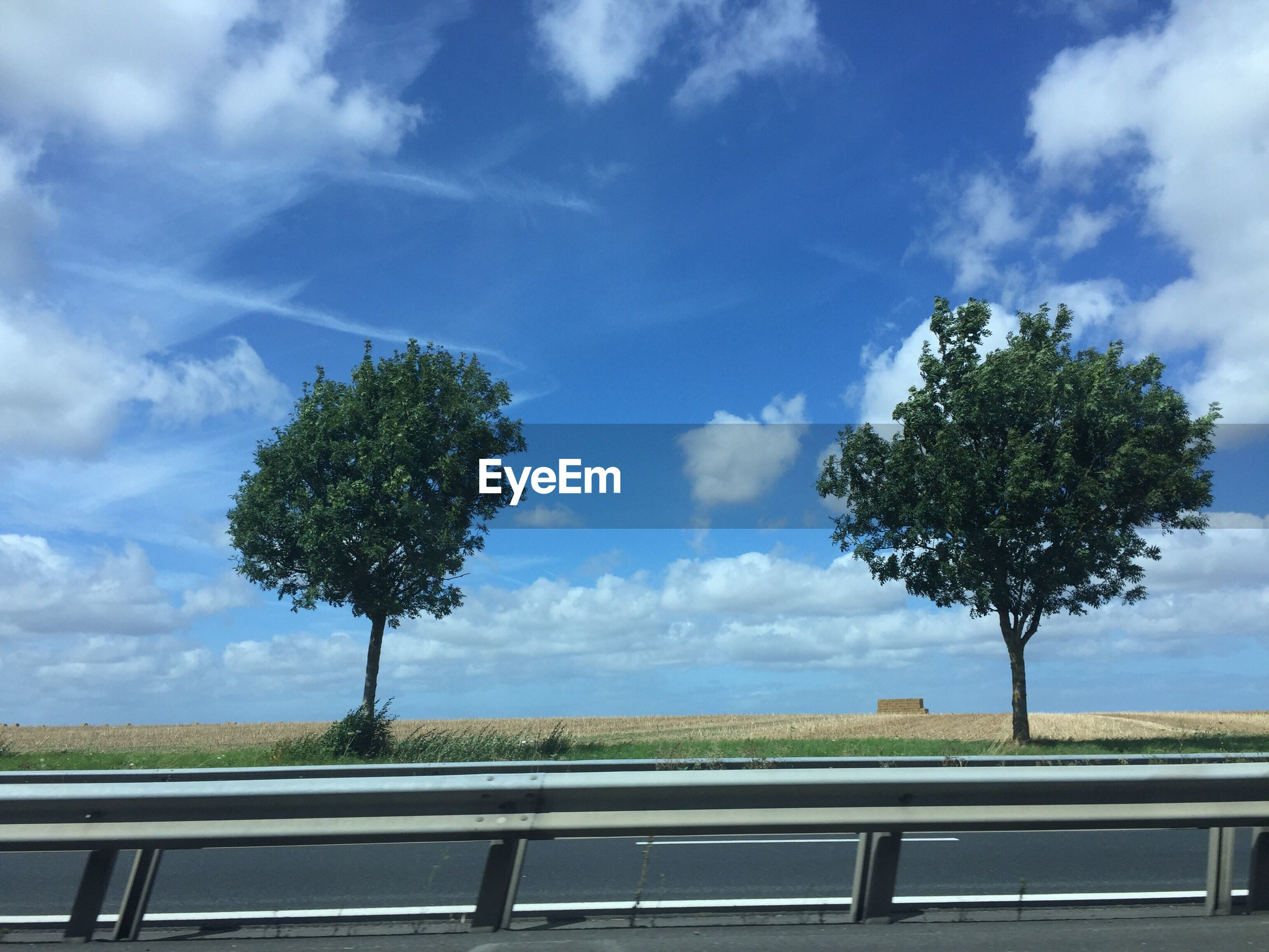Trees growing by empty road against sky