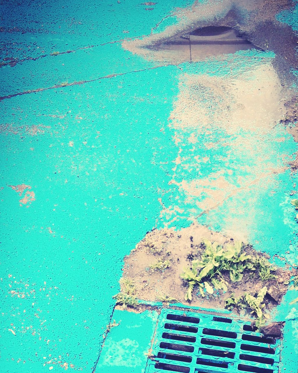 day, blue, swimming pool, outdoors, growth, close-up, water, no people, nature