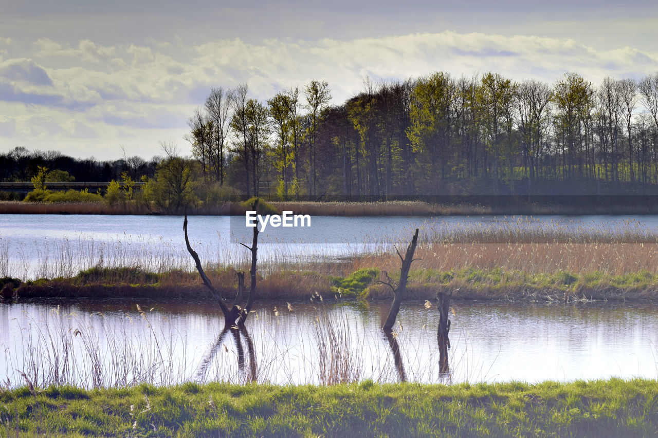 water, plant, lake, tranquility, tranquil scene, tree, beauty in nature, scenics - nature, sky, no people, growth, grass, nature, reflection, cloud - sky, non-urban scene, day, landscape, environment, outdoors, swamp