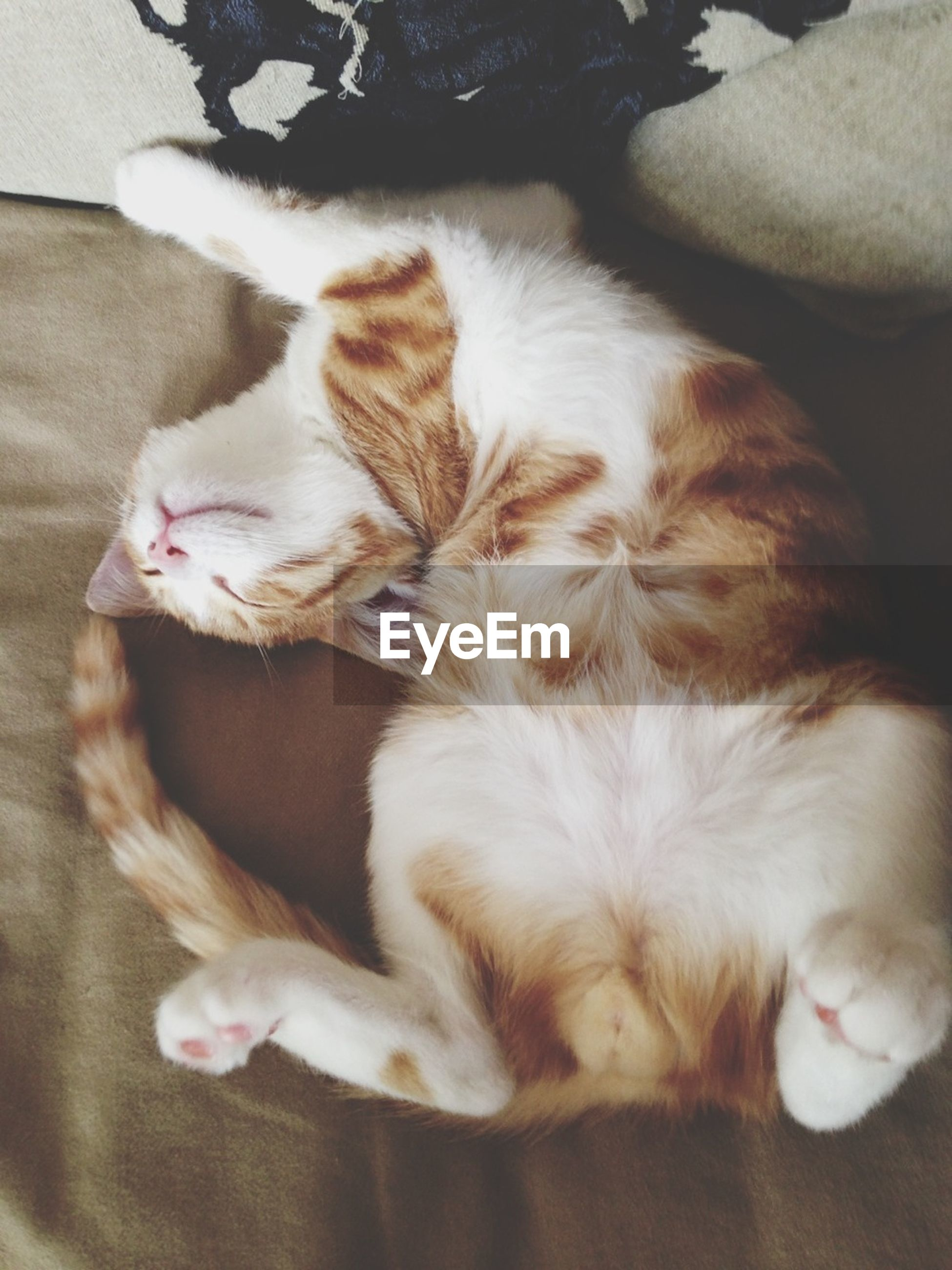 domestic animals, pets, mammal, animal themes, domestic cat, indoors, cat, one animal, relaxation, feline, sleeping, resting, lying down, eyes closed, whisker, home interior, high angle view, bed, two animals, home