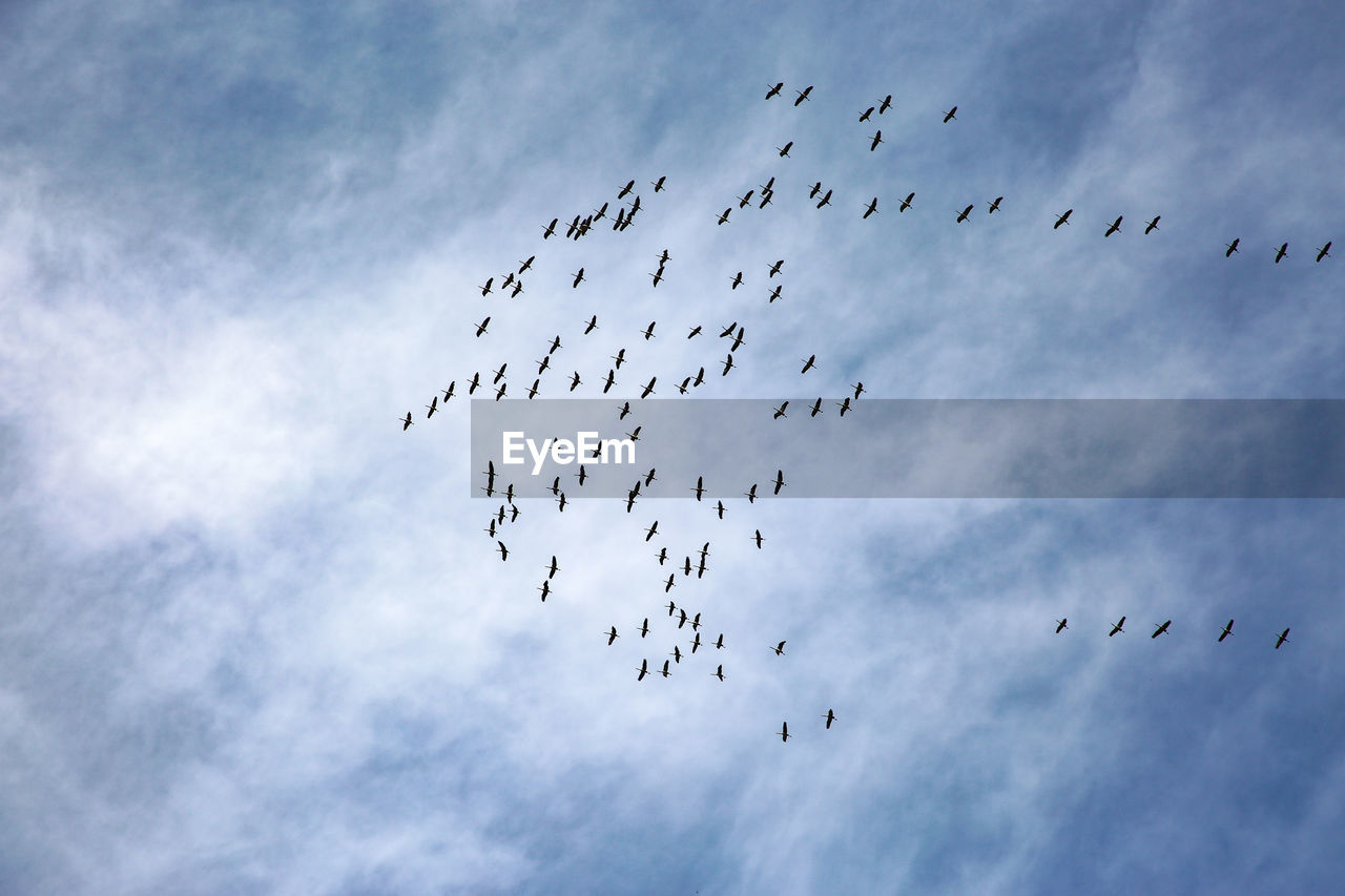 large group of animals, bird, animal themes, animal, animal wildlife, vertebrate, animals in the wild, flying, group of animals, flock of birds, sky, low angle view, cloud - sky, no people, mid-air, nature, animal migration, togetherness, motion, day