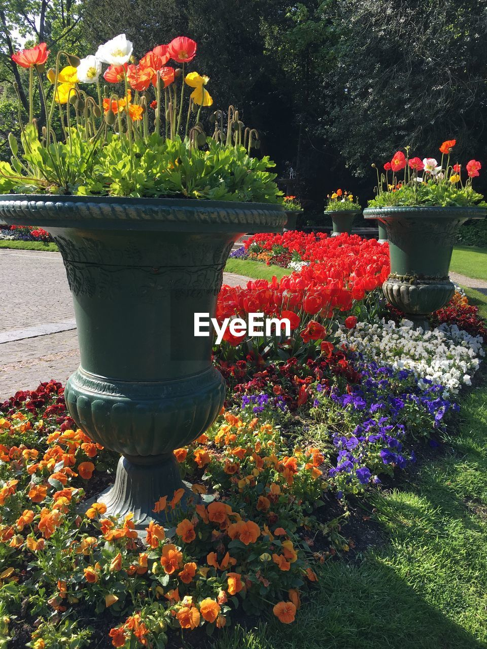 flower, growth, plant, nature, beauty in nature, potted plant, front or back yard, no people, leaf, freshness, petal, flowerbed, fragility, red, tree, outdoors, blooming, day, flower head