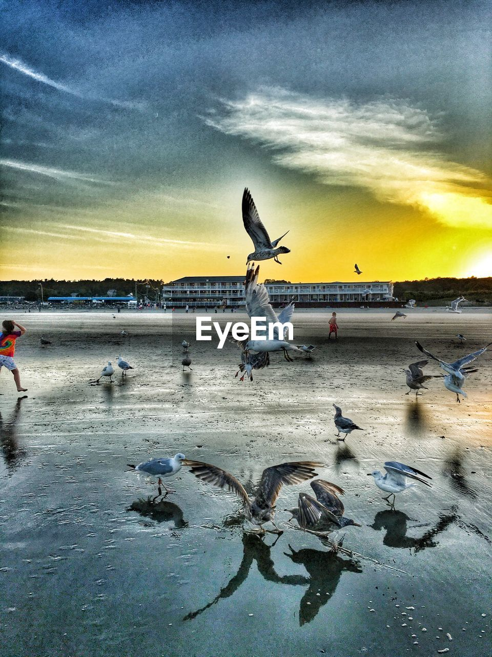 water, sky, bird, cloud - sky, animal themes, group of animals, animals in the wild, animal, animal wildlife, vertebrate, sea, flying, sunset, beauty in nature, nature, large group of animals, scenics - nature, reflection, seagull, outdoors, flock of birds