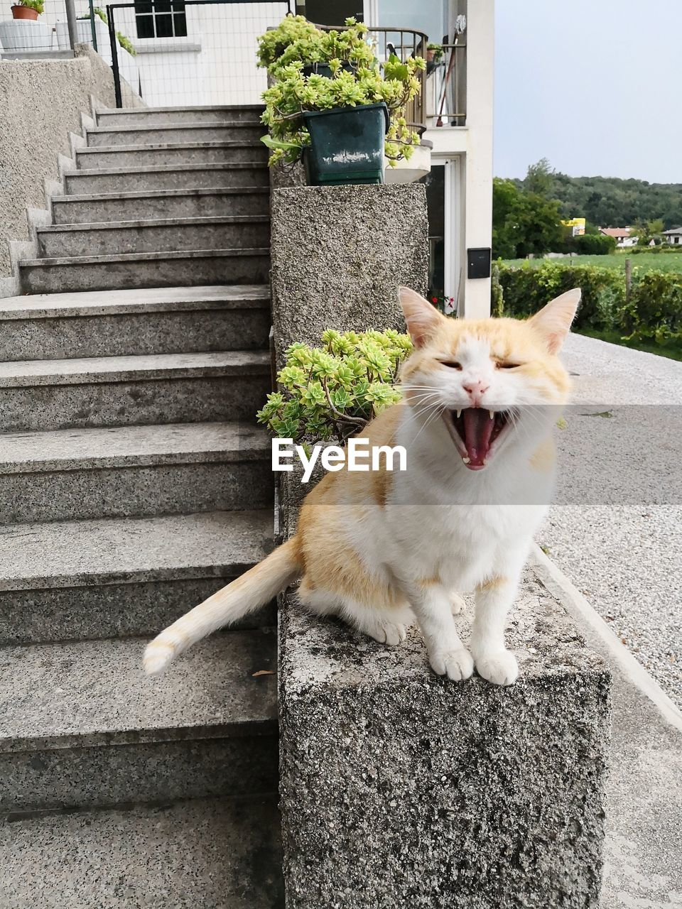 domestic, pets, domestic animals, mammal, one animal, animal, vertebrate, animal themes, staircase, mouth, mouth open, cat, architecture, feline, domestic cat, built structure, yawning, steps and staircases, facial expression, no people, animal mouth, aggression, whisker