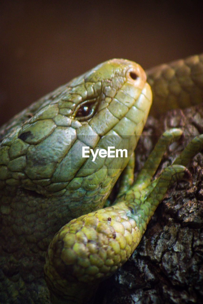 one animal, animal wildlife, reptile, animal themes, animal, close-up, animals in the wild, vertebrate, animal body part, no people, snake, animal head, focus on foreground, nature, day, eye, outdoors, animal eye, animal scale, green color, poisonous