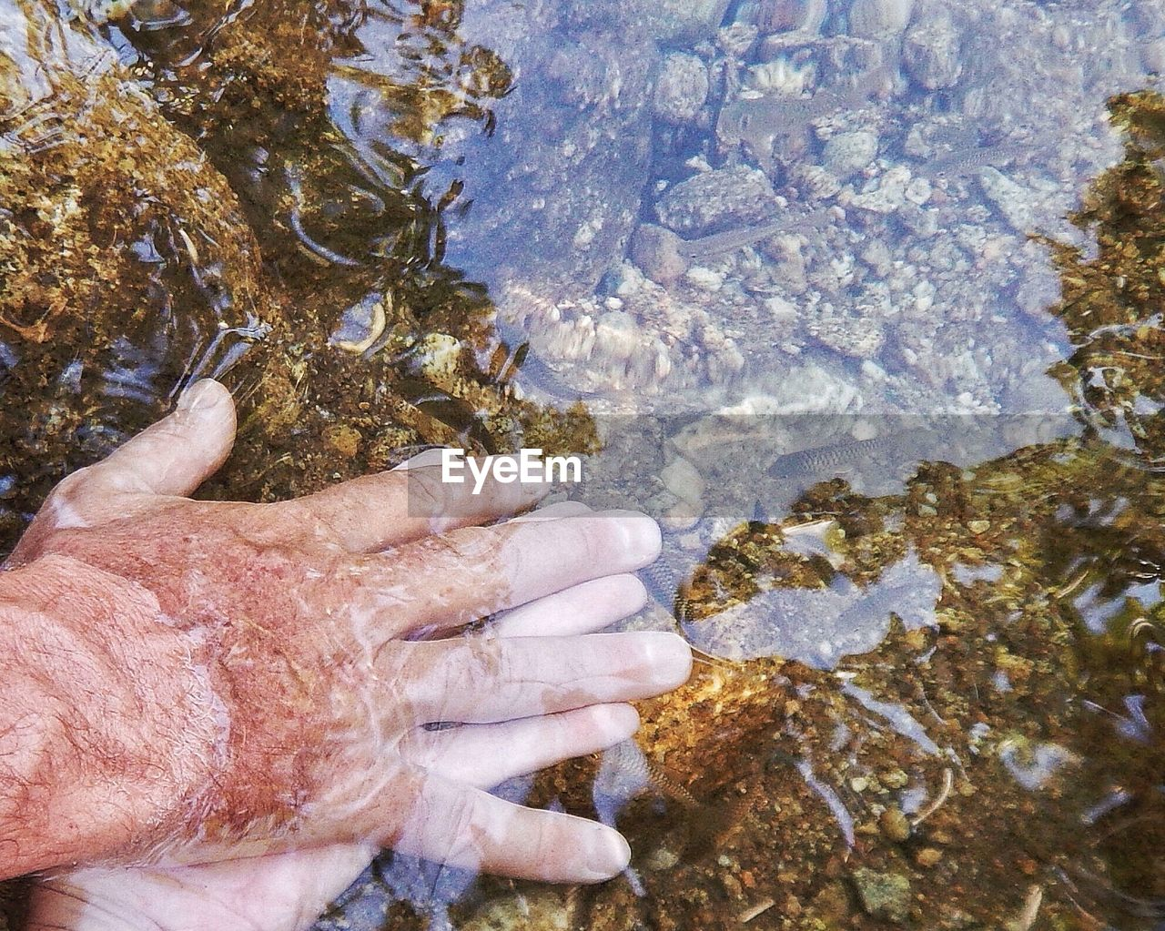 Cropped Image Of Man Washing Hands In Shallow Water