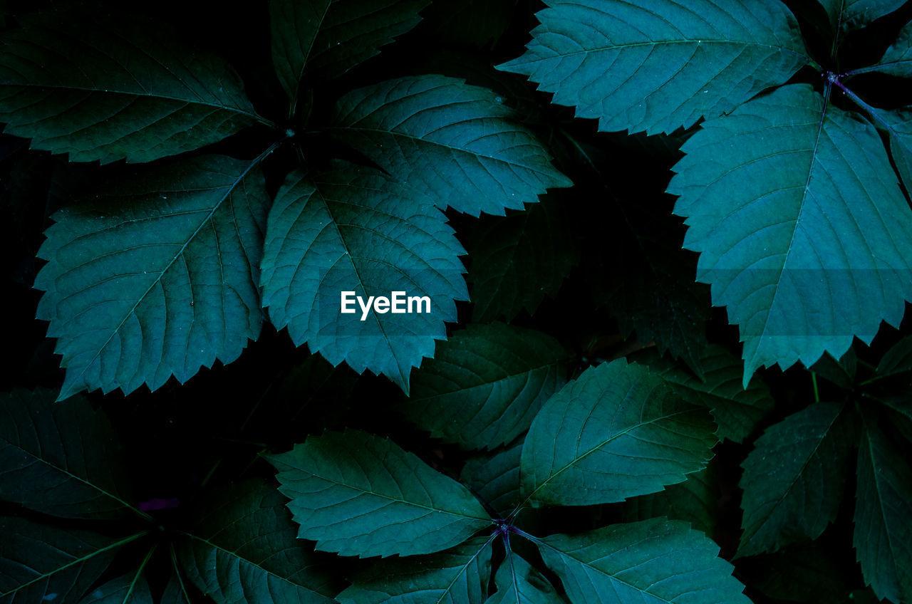 Dark leaf in the night