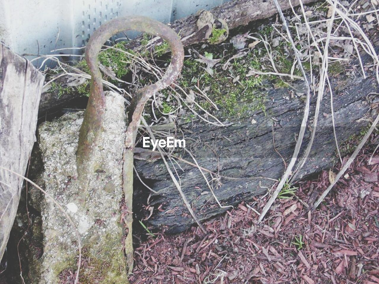 day, nature, no people, high angle view, outdoors, root, close-up, tree trunk, growth, plant, forest, grass, dead tree