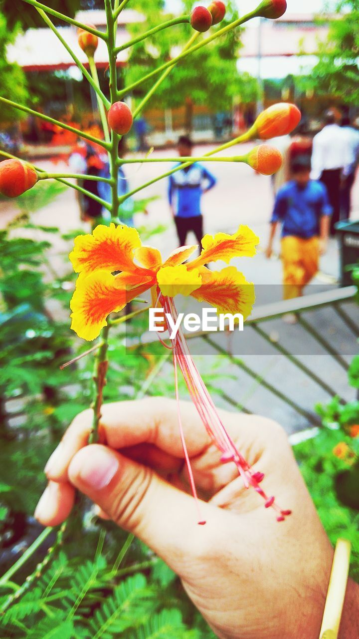 human hand, human body part, real people, one person, flower, holding, human finger, focus on foreground, outdoors, day, plant, lifestyles, women, close-up, leisure activity, nature, fragility, freshness, multi colored, beauty in nature, flower head, tree, people, adult, adults only