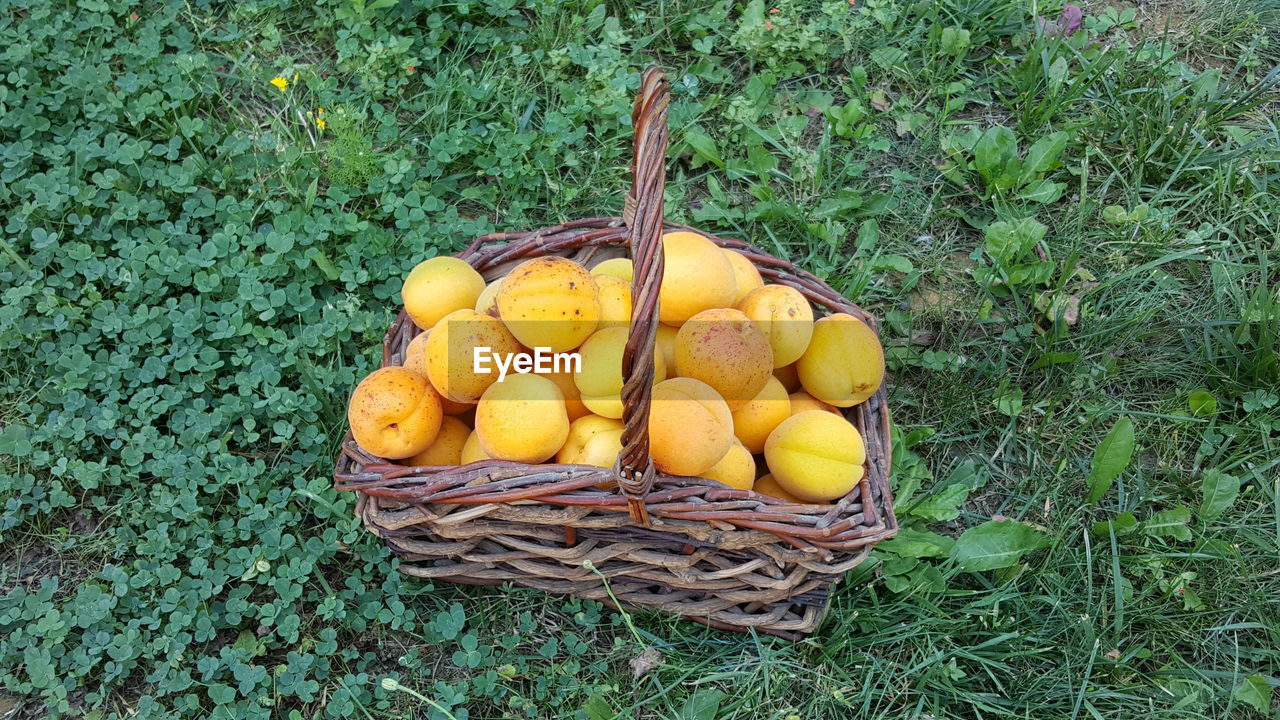 food and drink, healthy eating, freshness, food, basket, fruit, container, wellbeing, high angle view, yellow, plant, no people, green color, nature, day, still life, growth, citrus fruit, outdoors, lemon