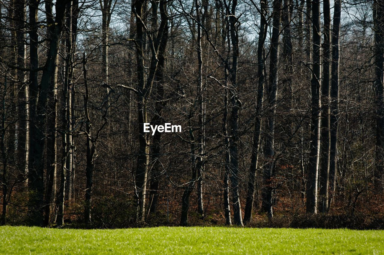 tree, plant, forest, land, nature, no people, bare tree, tranquility, woodland, grass, outdoors, day, tree trunk, trunk, landscape, non-urban scene, beauty in nature, tranquil scene, branch, sunlight