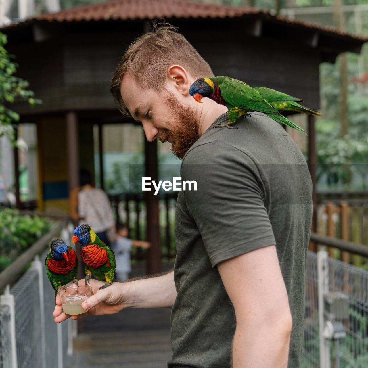 Man Feeding Parrots While Standing Outdoors