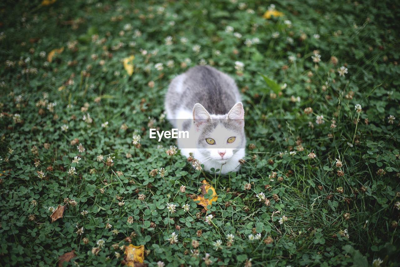 Portrait of a cat on green field