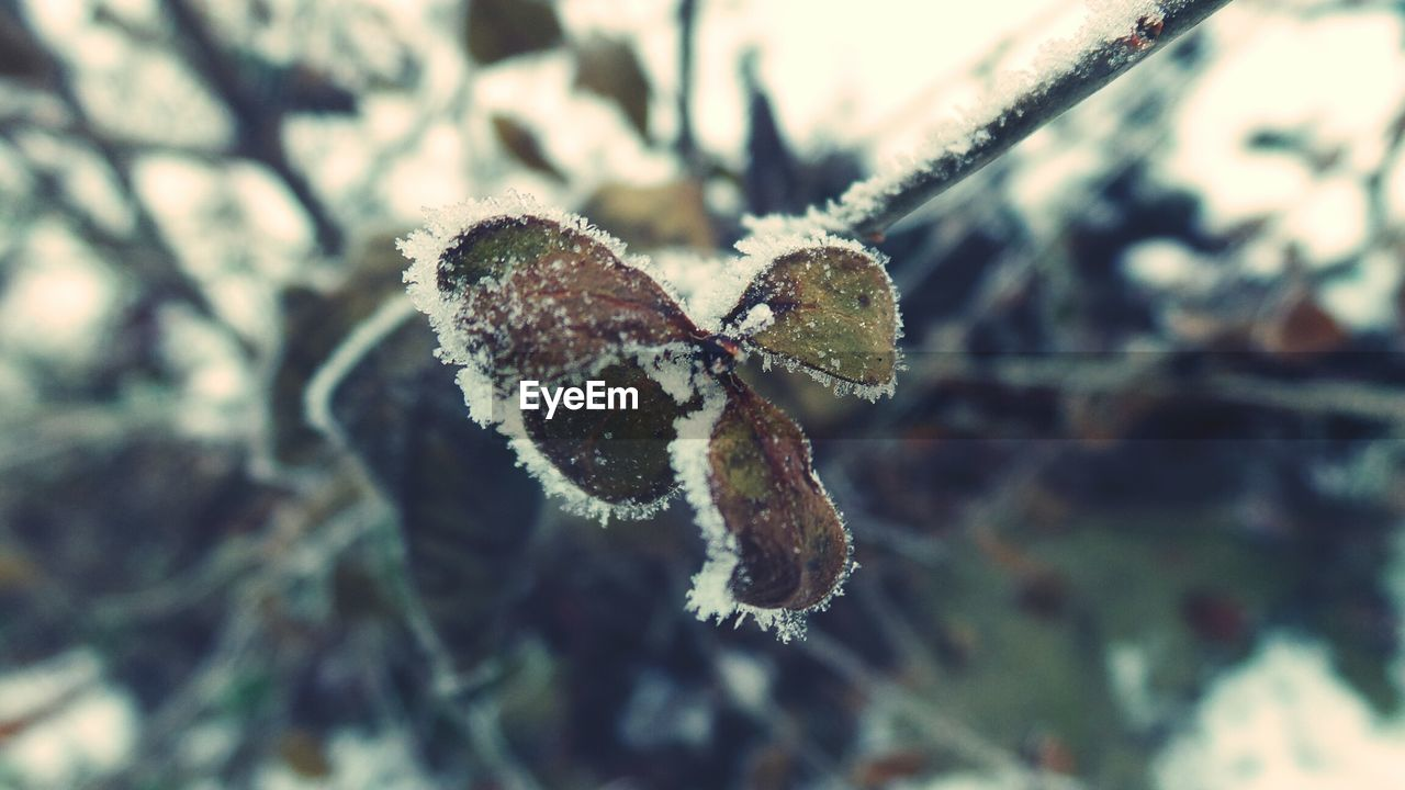 nature, cold temperature, close-up, focus on foreground, winter, snow, twig, outdoors, day, beauty in nature, no people, one animal, animal themes, leaf, animals in the wild, fragility, branch, tree