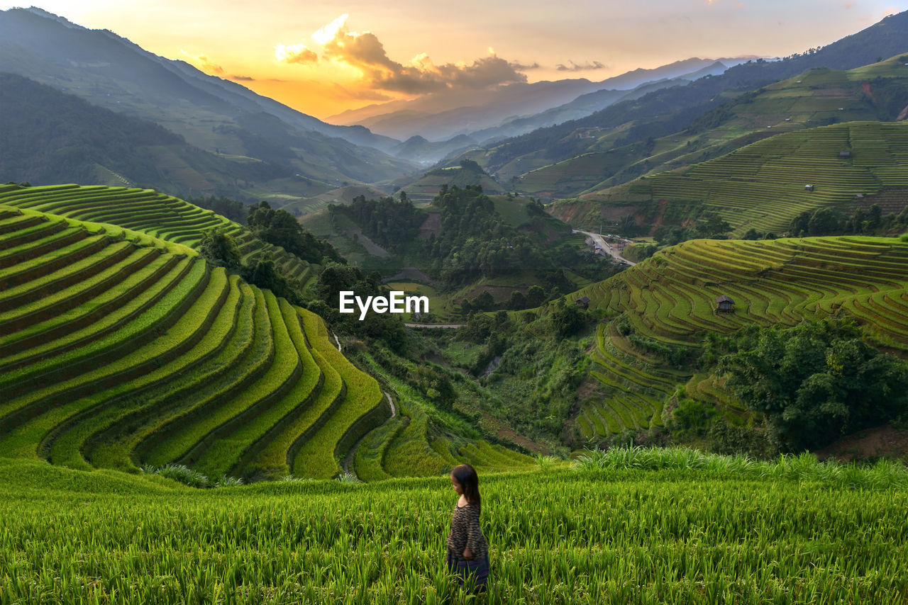 High Angle View Of Girl Standing On Terraced Field During Sunset
