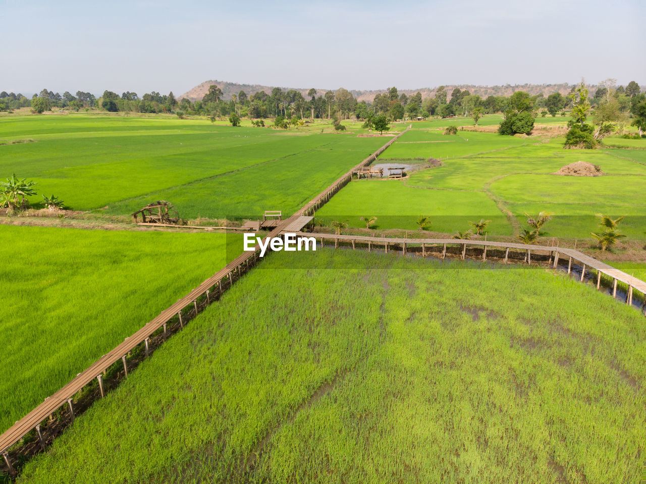 landscape, environment, field, plant, grass, land, green color, scenics - nature, tranquil scene, rural scene, nature, beauty in nature, tranquility, agriculture, day, no people, farm, growth, non-urban scene, outdoors