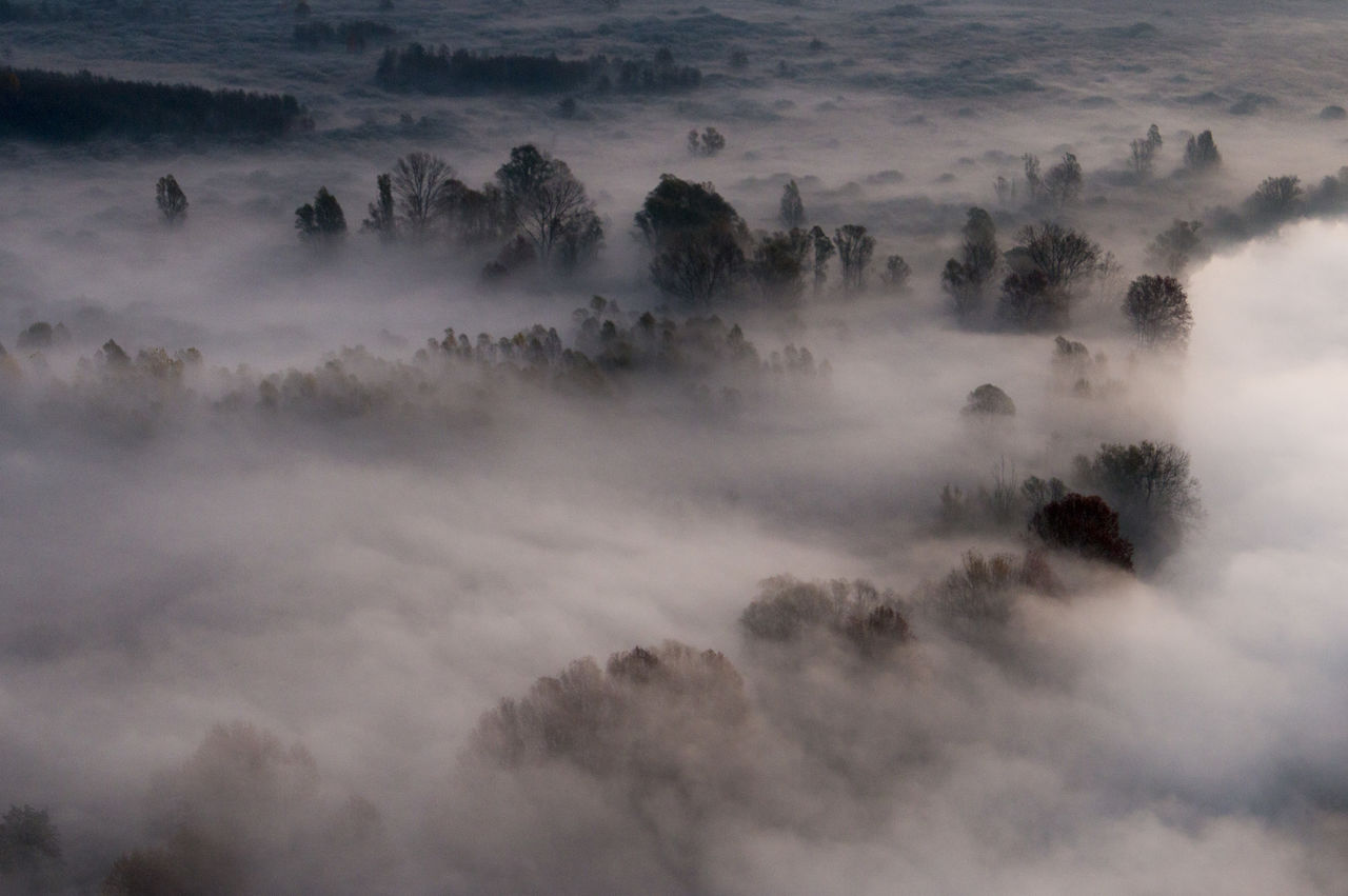 fog, nature, mist, beauty in nature, tranquility, scenics, no people, outdoors, tranquil scene, hazy, landscape, day, sky, tree