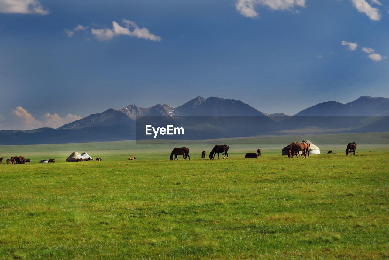Horses Grazing On Field Against Blue Sky