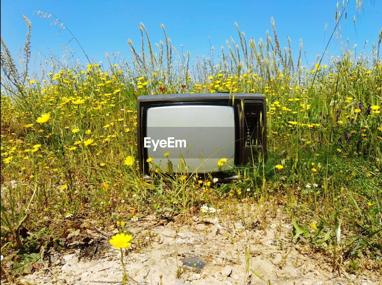 television set, technology, plant, land, field, nature, day, sky, no people, obsolete, grass, sunlight, arts culture and entertainment, device screen, screen, retro styled, growth, outdoors, green color, yellow, electrical equipment, television show, watching tv