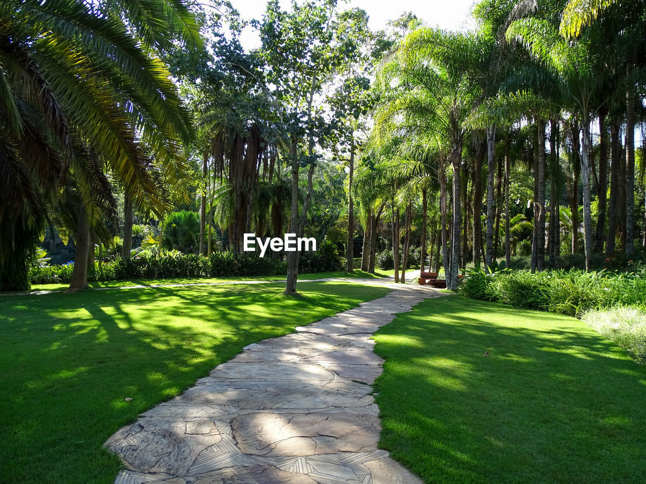 tree, plant, grass, tropical climate, green color, nature, palm tree, beauty in nature, no people, scenics - nature, tranquility, park, growth, tranquil scene, environment, sunlight, land, footpath, landscape, outdoors