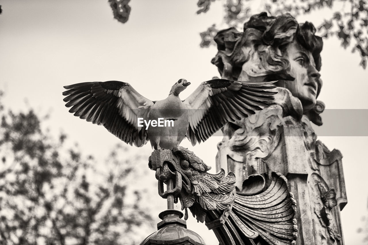 low angle view, sky, bird, vertebrate, animal wildlife, day, animals in the wild, sculpture, nature, flying, statue, art and craft, representation, no people, spread wings, focus on foreground, outdoors, human representation, angel