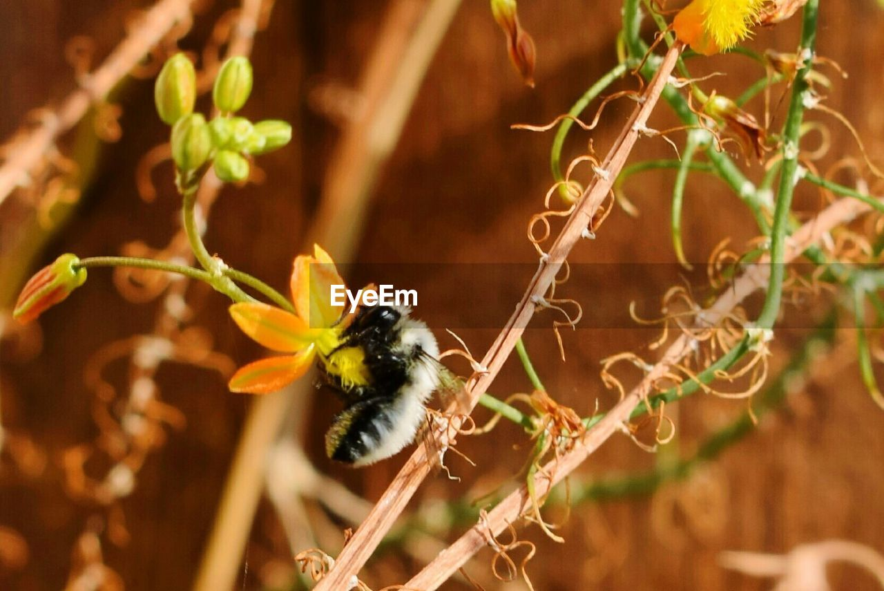 insect, animal themes, animals in the wild, one animal, animal wildlife, bee, nature, plant, outdoors, growth, no people, flower, close-up, day, fragility, pollination, beauty in nature, freshness, buzzing, flower head