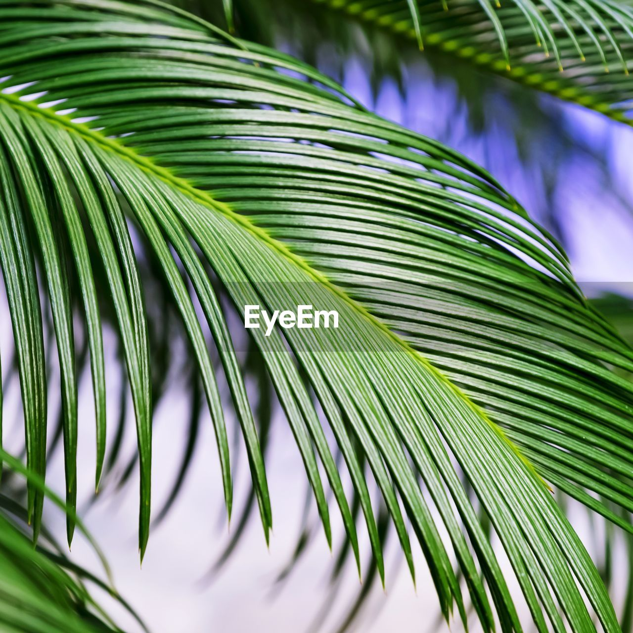 CLOSE-UP OF PALM LEAVES AGAINST SKY