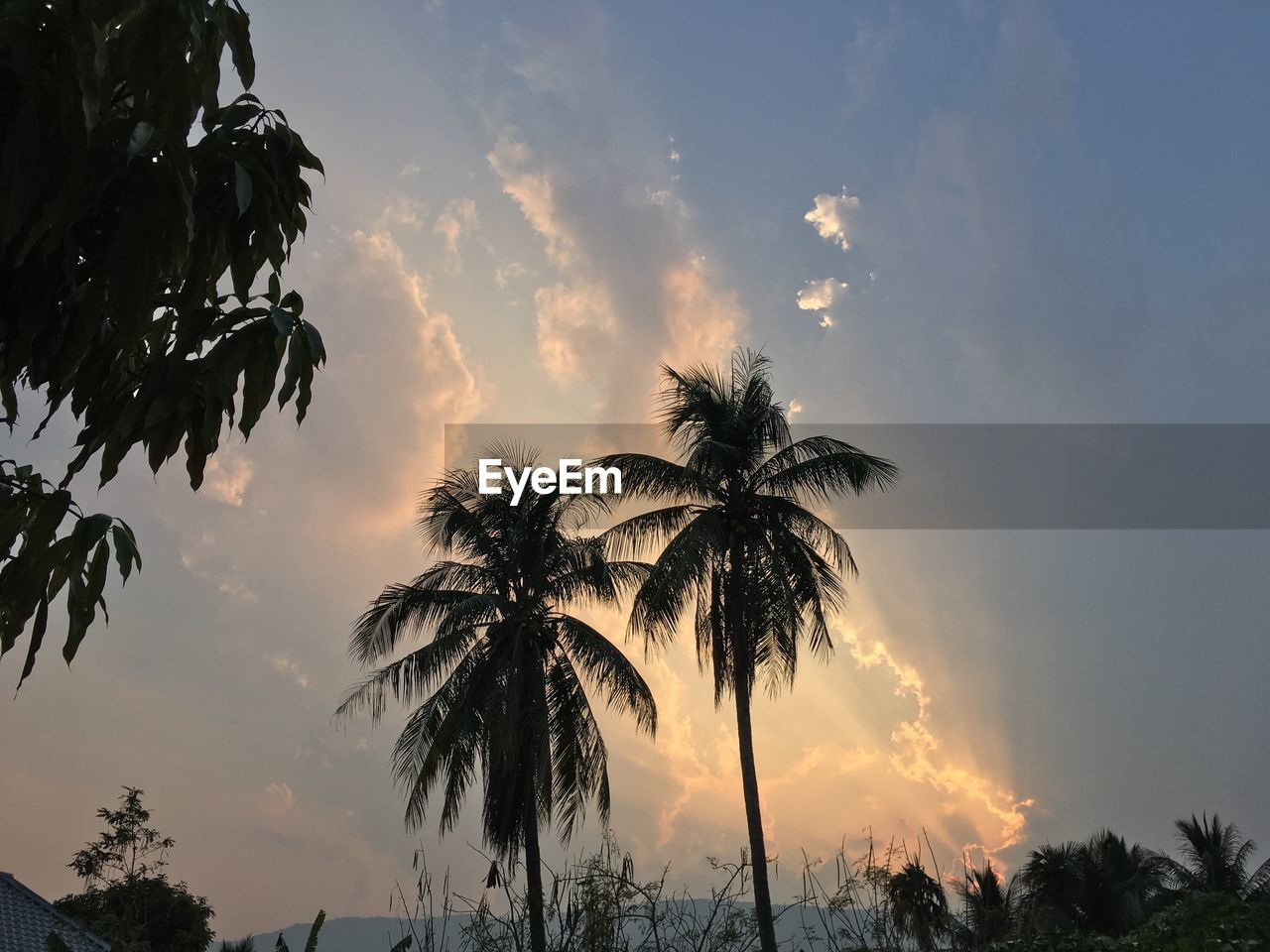 sky, tree, sunset, plant, cloud - sky, palm tree, beauty in nature, tropical climate, silhouette, scenics - nature, tranquility, tranquil scene, nature, growth, low angle view, orange color, no people, idyllic, coconut palm tree, outdoors, tropical tree, palm leaf