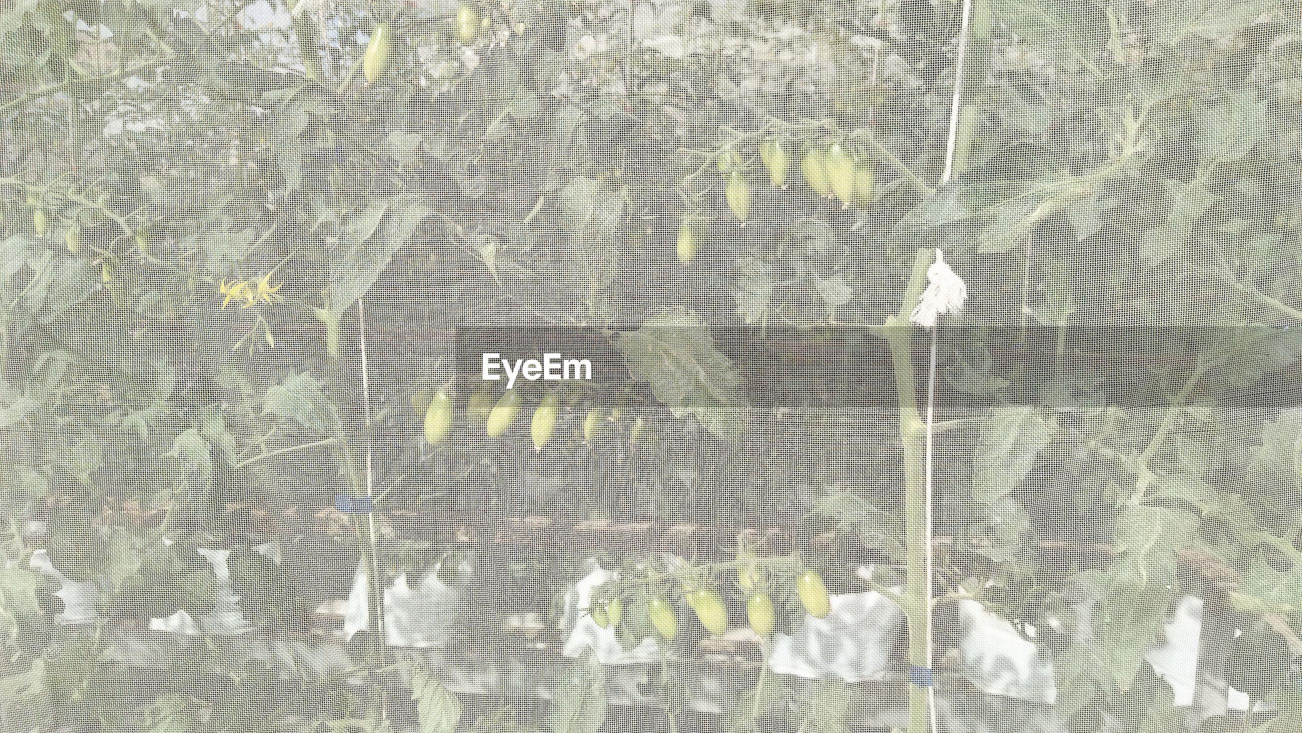 Full frame shot of plant in green house