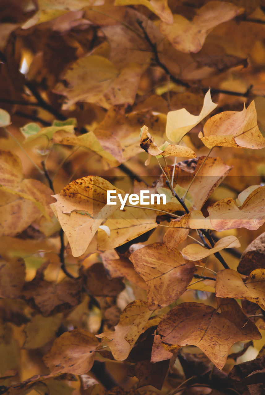 leaf, plant part, beauty in nature, close-up, dry, nature, plant, autumn, change, no people, day, growth, leaves, full frame, vulnerability, land, fragility, selective focus, backgrounds, field, outdoors, fall