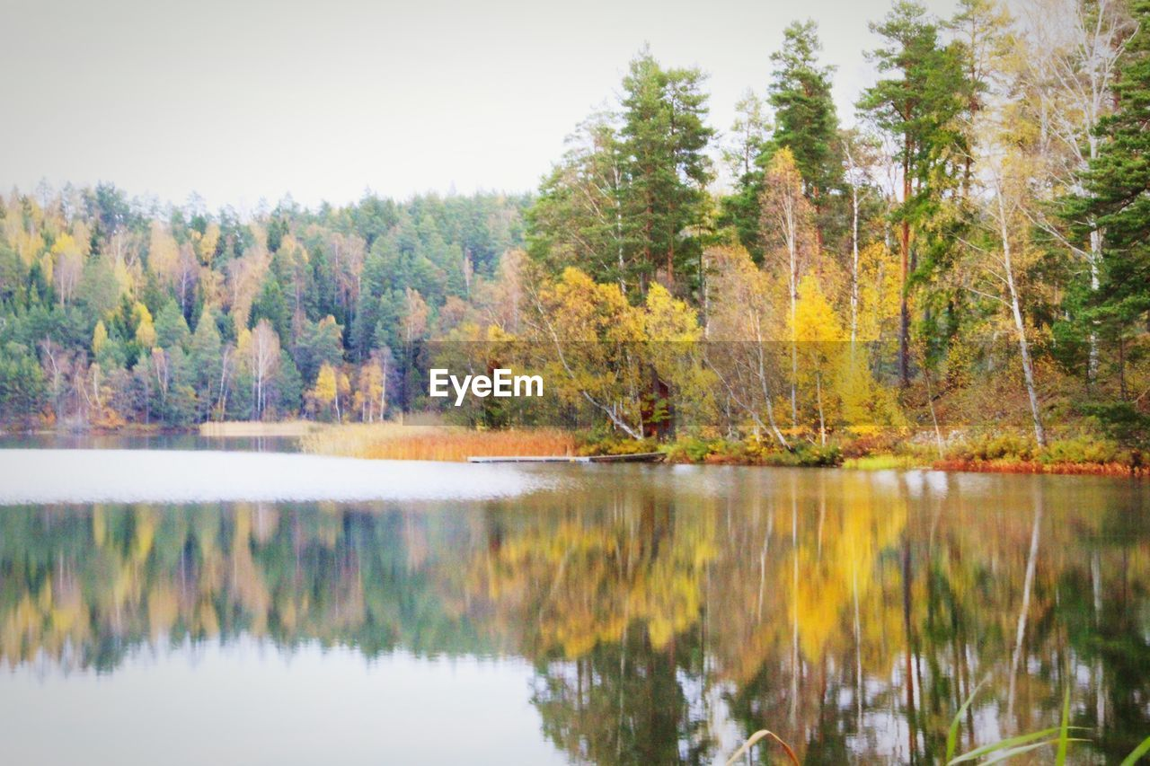 Autumn trees by calm lake