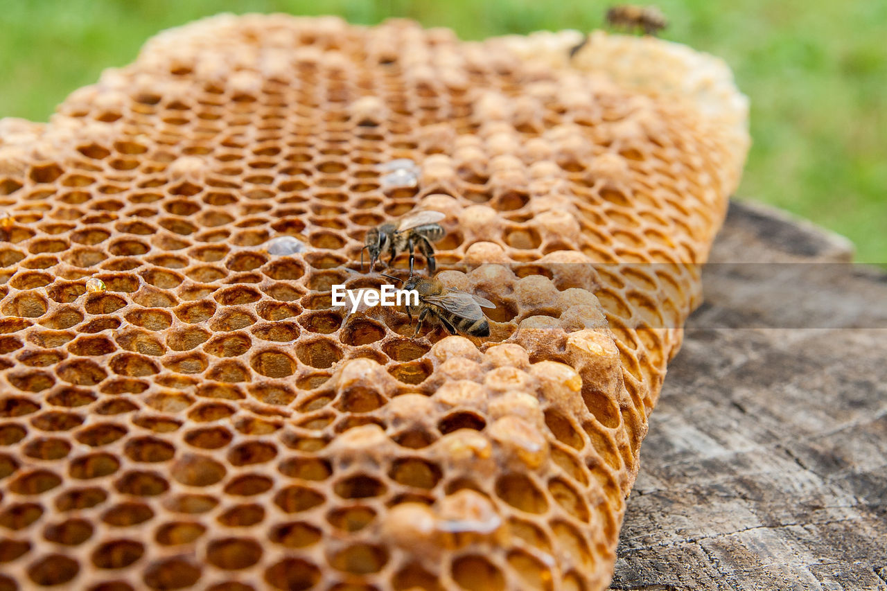 High Angle View Of Bees On Honeycomb