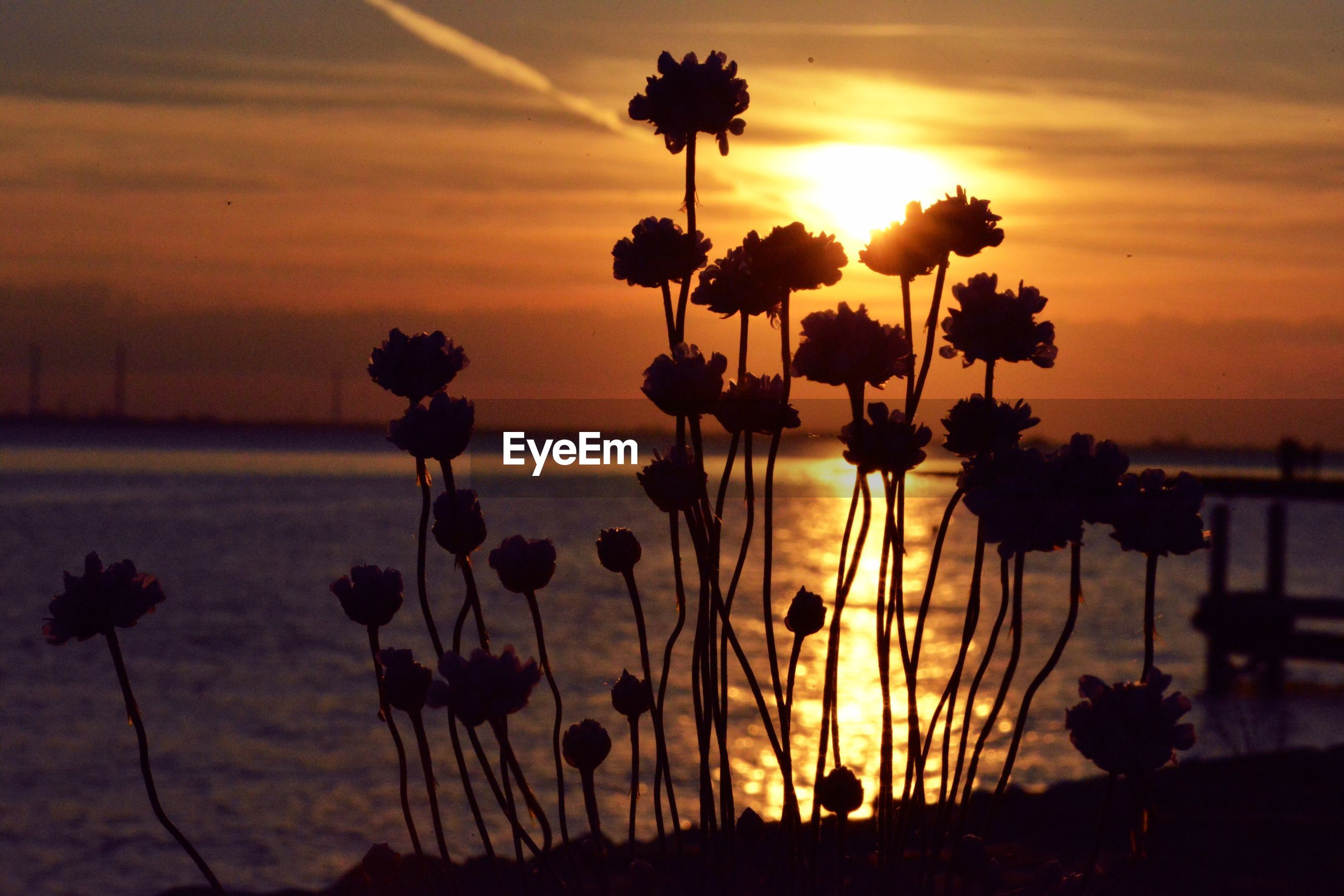 SILHOUETTE PLANTS BY SEA AGAINST ORANGE SKY