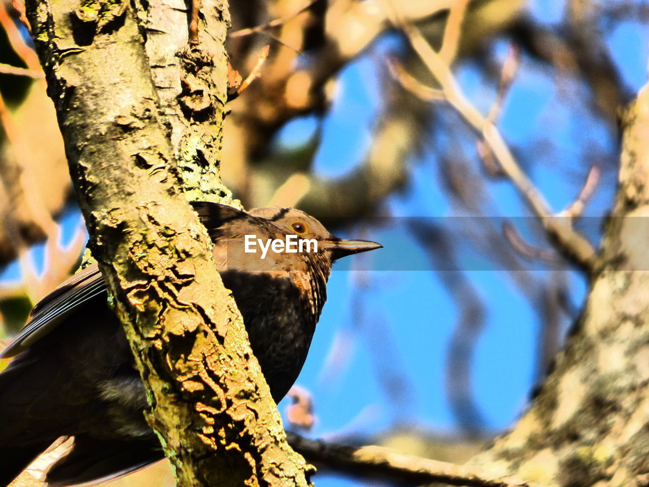 bird, tree, tree trunk, animal themes, animals in the wild, one animal, focus on foreground, branch, woodpecker, nature, day, animal wildlife, no people, outdoors, close-up, sunlight, low angle view, perching, beauty in nature, bird feeder