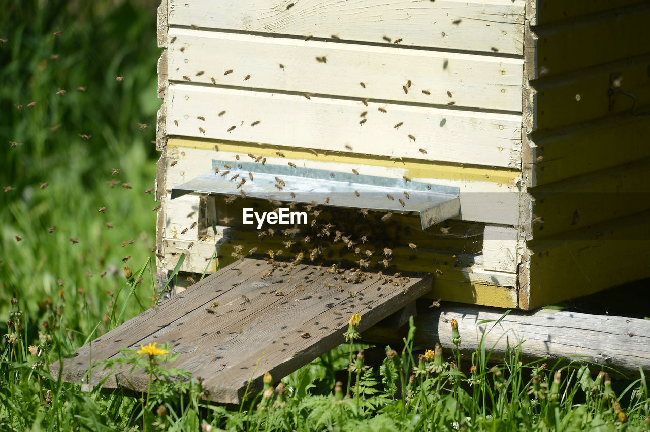 wood - material, nature, plant, grass, day, field, apiculture, land, insect, bee, beehive, box, green color, invertebrate, animals in the wild, no people, animal themes, growth, outdoors, bench, box - container