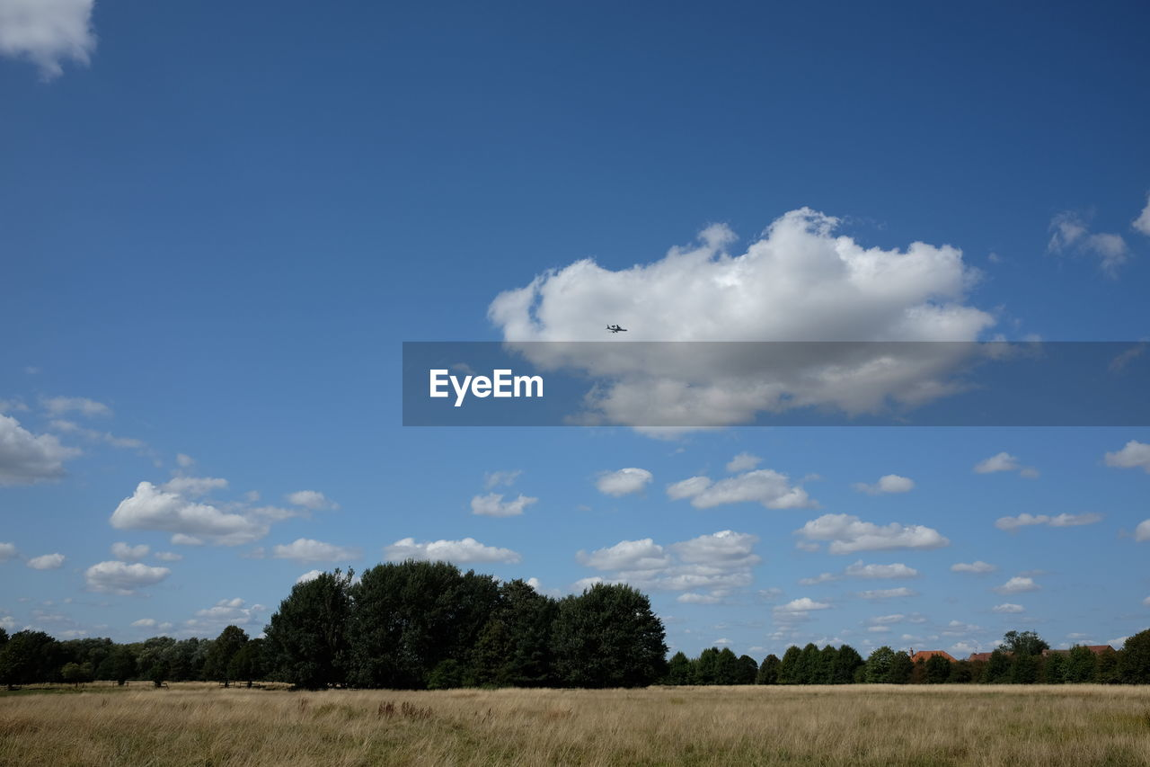 sky, cloud - sky, plant, tree, landscape, beauty in nature, tranquil scene, tranquility, scenics - nature, field, environment, land, day, nature, no people, blue, non-urban scene, outdoors, growth, idyllic