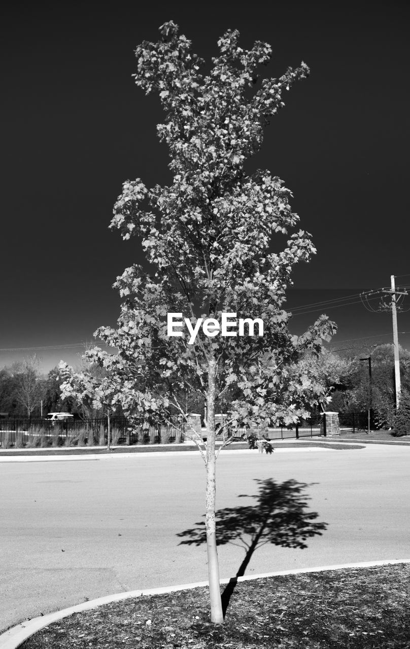 tree, night, nature, no people, outdoors, winter, growth, beauty in nature, snow, building exterior, sky
