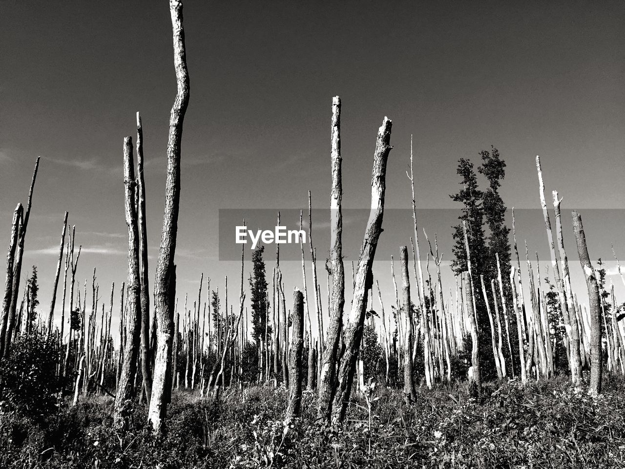 Low angle view of broken trees against sky