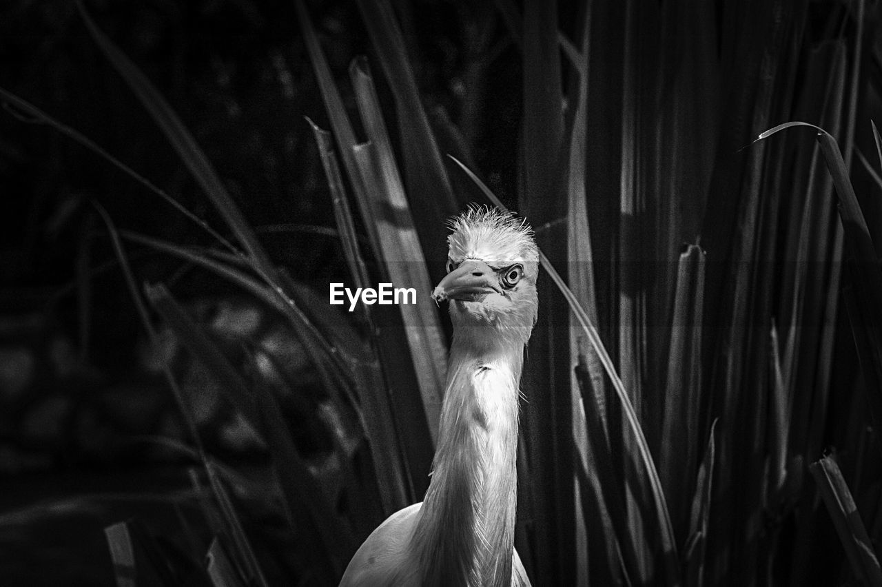 Black and white image of water bird