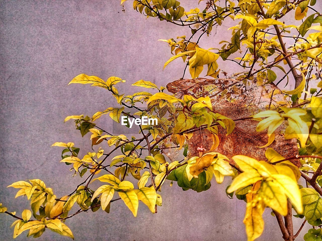 yellow, tree, growth, branch, flower, nature, no people, leaf, beauty in nature, outdoors, day, fragility, plant, close-up, autumn, flower head, freshness